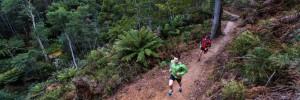 Run like a Tiger at new Tassie Trail Fest