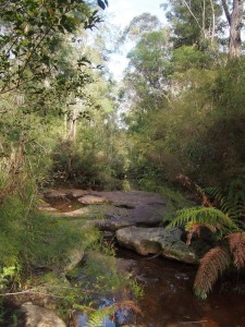 Camp Fire Creek